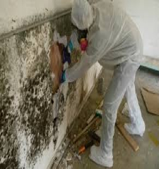 Green Guys Junk Removal provides mold remediation in marietta ga